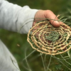 Wiradjuri Grasslands, Weaving and Tanning Project – 2018 Workshop Series